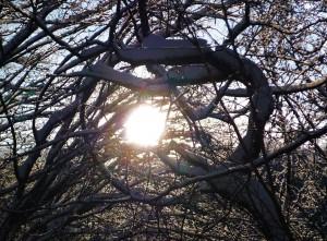 Von Sonnenlicht durchflutetes Geäst